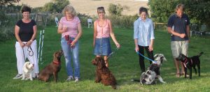 dog trainers isle of wight
